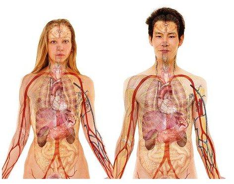 organos-afectados-por-artritis-reumatoidea